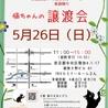 ★東銀座徒歩2分★猫の未来とびら譲渡会★