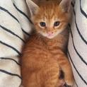 生後1カ月の子猫