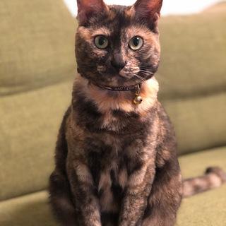 性格花まる!とっても飼いやすい若いメスの猫です!