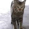 高齢者多頭飼育  保健所行き確定  複数の猫たち