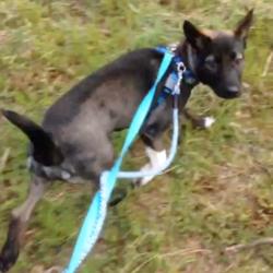 4ヶ月10kgそして初一人散歩☆