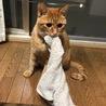 このタオルは僕のもの(`・ω・´)