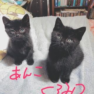生後2ヶ月くらい黒猫姉妹2匹