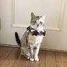 美形のパステルサビ猫ちゃん
