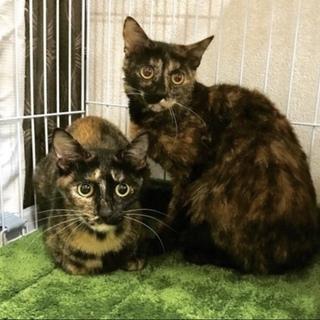 サビ猫美猫姉妹