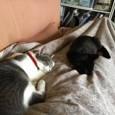 ソファに寝転ぶと腕と足が固定されます(笑)