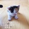 お試しホームステイ可★子猫【保護猫】 サムネイル4