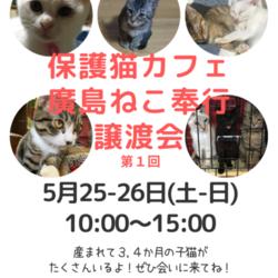 譲渡型保護猫カフェ 廣島ねこ奉行 譲渡会 第1回目