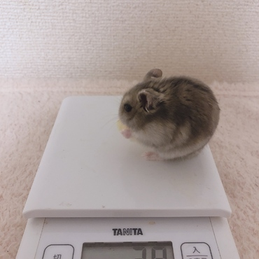 体重測定⚖