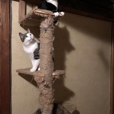 久しぶりの猫のなる木