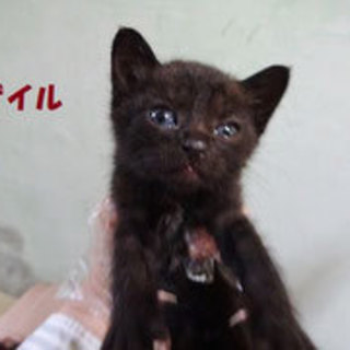 かわいい盛りの黒猫、ずっとのお家を探してます。