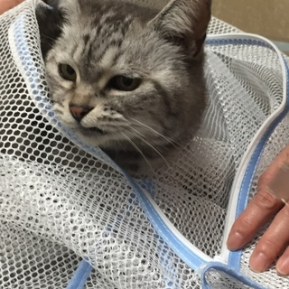 シニア人とシニア猫一緒にハッピーになりませんか?