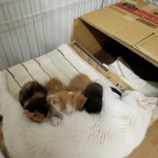 《里親さま決定しました》子猫の里親募集