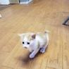 《里親さま決定しました》子猫の里親募集 サムネイル2