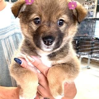 個体番号:W281 可愛い小さな子犬