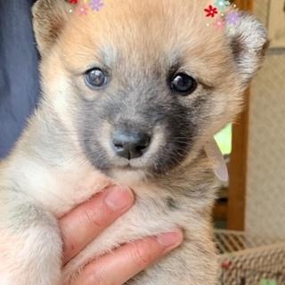 個体番号:W284 可愛い子犬さん