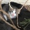 子猫の里親さんを募集しています!