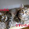 6/1再募集★ちび猫姉妹