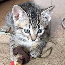 *幸せ探しのネコ譲渡会*子猫* サムネイル2