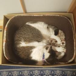 ベッドで寝るキリコ