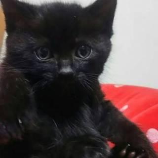 1ヵ月半!可愛い4兄妹 黒猫くろたん!