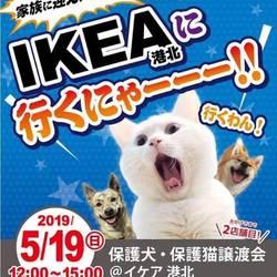 【おーあみ避難所】IKEA港北 里親会開催!