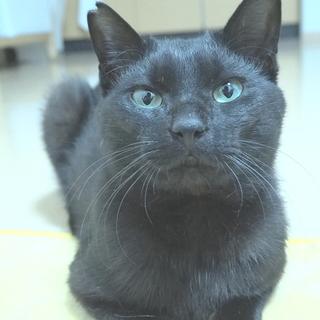 とっても人懐っこい黒猫のオス