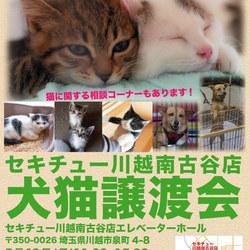 セキチュー川越南古谷店☆犬猫譲渡会