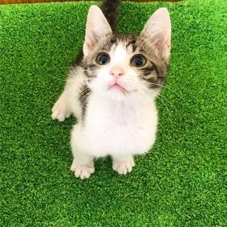3ヶ月の子猫の里親さん募集中