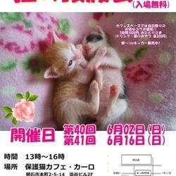 明石【猫の譲渡会】猫まみれwithカーロ 第40回