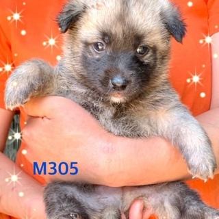 個体番号:M305 生後1カ月の赤ちゃん