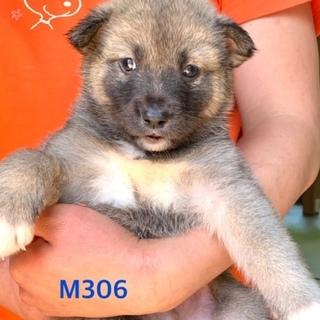 個体番号:M306 一ヶ月の赤ちゃん