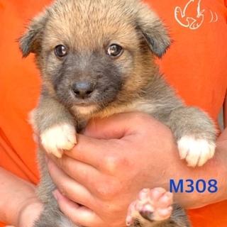 個体番号:M308 一ヶ月の赤ちゃんです。