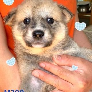 個体番号:M309 1カ月の赤ちゃんです。
