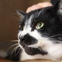 白黒の大人猫。抱っこもOK!