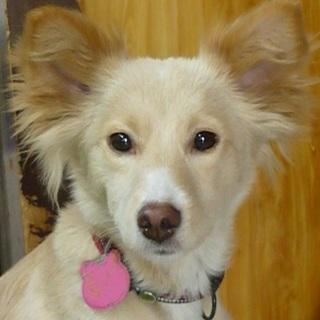 小柄な中型犬mix♀・トイレ躾け済・室内飼い