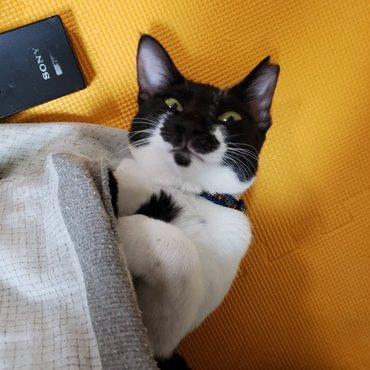 寝ている所を隠し撮りしようとしたらバレた所です(`・ω・´;)