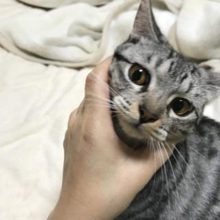 甘えん坊 美猫 ユミちゃん 親子かきょうだい一緒に