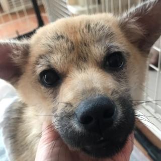 可愛い仔犬の女の子♪生後4か月位です