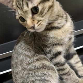 かわいいキジトラ猫ちゃん