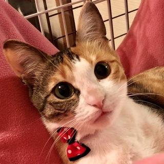 可愛すぎるリヨンちゃんは綺麗な三毛猫❣️