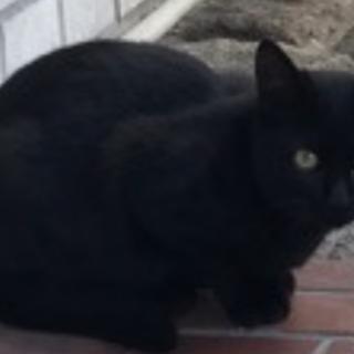 大至急:仔猫ちゃんの保護主さまを探しています
