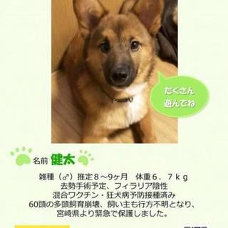 個人飼育崩壊保護・推定8か月子犬・健太