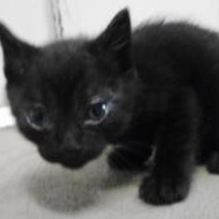 里親様を待っています。子猫♂茶黒白