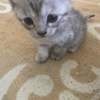 可愛い五つ子の子猫の里親さん募集中です