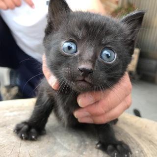 幸運をもたらす黒猫ちゃん