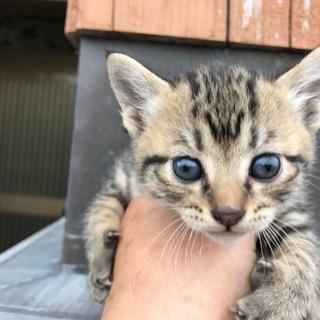 野良猫ちゃんが生んだ5姉弟