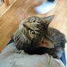 甘えん坊をこじらせた猫★ダンパー サムネイル2