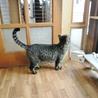 甘えん坊をこじらせた猫★ダンパー サムネイル7