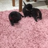 警戒心ゼロの超甘えた子猫達 サムネイル4